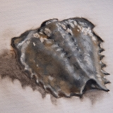 limulus, April 2021, oil on canvas, 6x5in